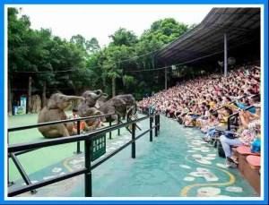 Elephants at Chimelong Safari World.