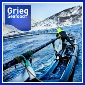 Grieg Seafood predator exclusion nets.