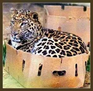 (Big Cat Rescue photo)