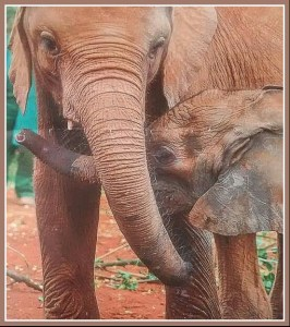 (David Sheldrick Wildlife Trust)