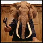 Hunters can't just kill elephants to claim to save them,  says judge