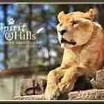 Lions, Tigers & Bears, heroic efforts, & Big Cat Rescue