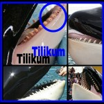 Did bad teeth kill Tilikum?  Necropsy would tell us––if released