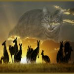 Aussie feds inflated feral cat population 3 to 10 times to push cull policy
