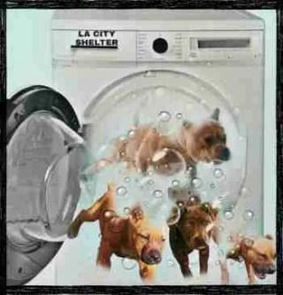 Dog laundering