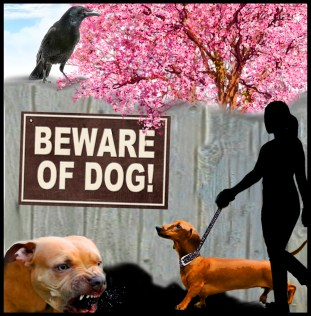 Pit bull menacing a female walking her dachshund dog and a raven on the broken fence.