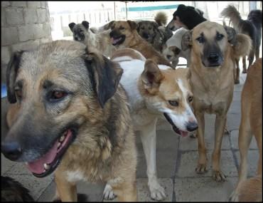 VAFA dogs