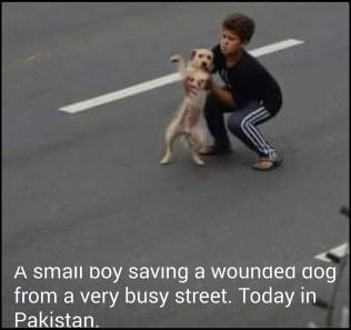 Turkish boy rescues dog