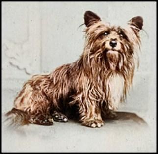 Grey Friars Bobby Scotland Skye terrier dog