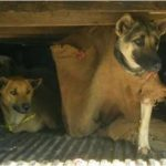 ASEAN nations move to implement dog meat trafficking ban