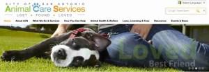San Antonio Animal Care Services home page