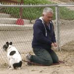 "Will Cesar Millan be charged for ""hog-dog rodeo""?"