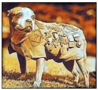 Sergeant Stubby in his uniform
