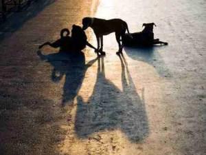 (Help Animals India photo)