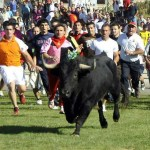 "Spanish animal defenders reject bullfighting as ""cultural heritage"""