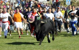"Unarmed activists tried to chase a bull named Volante away from a heavily armed mob of ""bull hunters"" at the 2012 Toro de la Vega in Tordesillas,  Spain.  (Spanish Animal Defenders)"