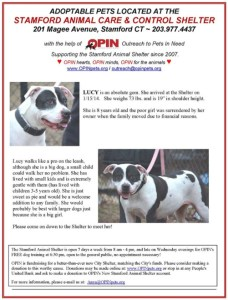 Ads like this one posted by Outreach for Pets In Need on behalf of dogs at the Stamford Animal Shelter may have helped to spark investigation of adoption safety.  This ad  promotes a pit bull for adoption into a family with toddlers without mentioning that she is a pit bull.