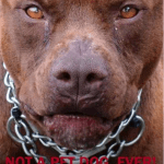 How to stop dogfighting the quick,  easy way