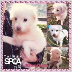 Taiwan SPCA