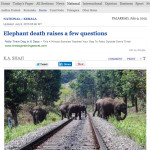 Train speeding in the wee hours kills yet another elephant