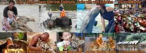 """""""Tiger Temple"""" Facebook page"""