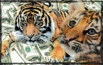 Tiger & lion cub