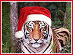 Tiger for Christmas