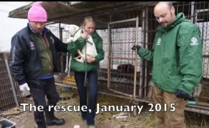 Left to right: alleged Ilsan dog farmer Jung Moon-suk, Lola Webber of Humane Society International, and Adam Parascondola of Humane Society International. (From HSI video.)