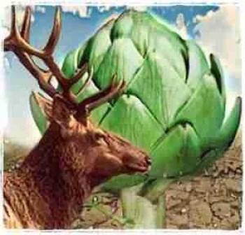 Tule elk with artichoke