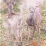 Two fawn deer in wildfire