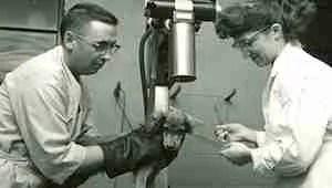 University of Minnesota veterinary researchers circa 1960.