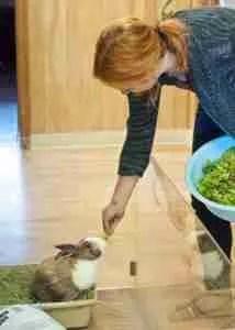 House Rabbit Society volunteer (HRS photo)