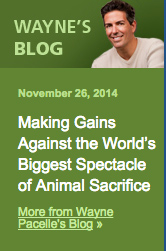 Wayne's blog 2014