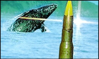 Whale and bullet