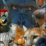 Wildlife Waystation wild animals 2