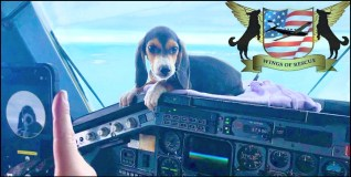 Wings of Rescue air animal transport