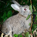 Whole Foods Market to quit selling rabbit parts