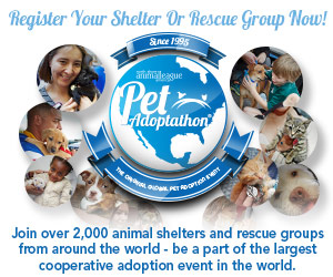 Pet Adoptathon - North Shore Animal League