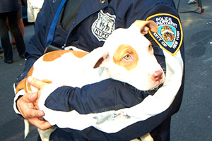 Photo distributed with the January 24,  2014 announcement that the transition of humane law enforcement duties from the ASPCA to the NYPD had been completed.