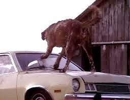 "Cujo ""kills"" a Ford Pinto."