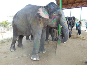 PETA/India photo showing Jaipur elephant engaging in alleged stereotypic head-shaking.