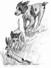 illustrationbooksignings