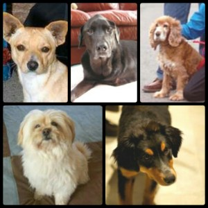 Some of the many dogs who were killed by pit bulls during 2015.