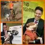 Best Friends,  the ASPCA,  & HSUS:  rethink pit bulls!