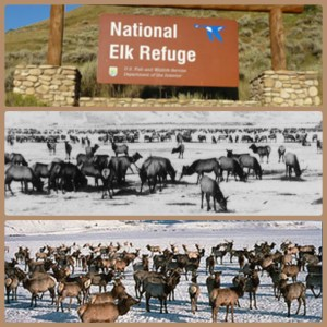 Second photo from top: the National Elk Refuge soon after it opened in 1912. Third photo: the National Elk Refuge today. (National Park Service photos)