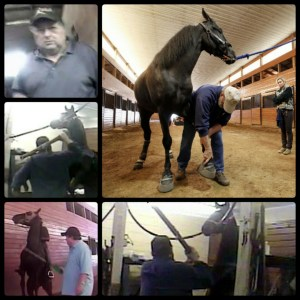 Images from HSUS undercover video of abuses involving convicted trainer Jackie McConnell.