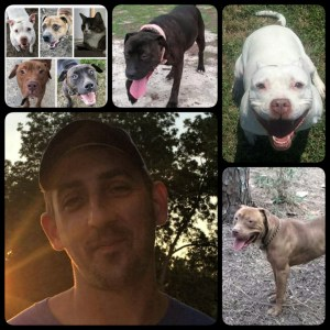 Devin Bannon at lower right, with eight pit bull photos from his Facebook page.