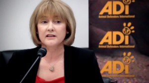 Animal Defenders International president Jan Creamer.  (ADI photo)