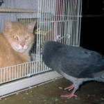 Tony (cat) & Mr. Pigeon