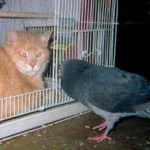 Tony (cat) & Mr. Pigeon